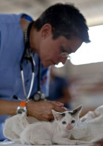 Picture of a veterinarian with a kitten