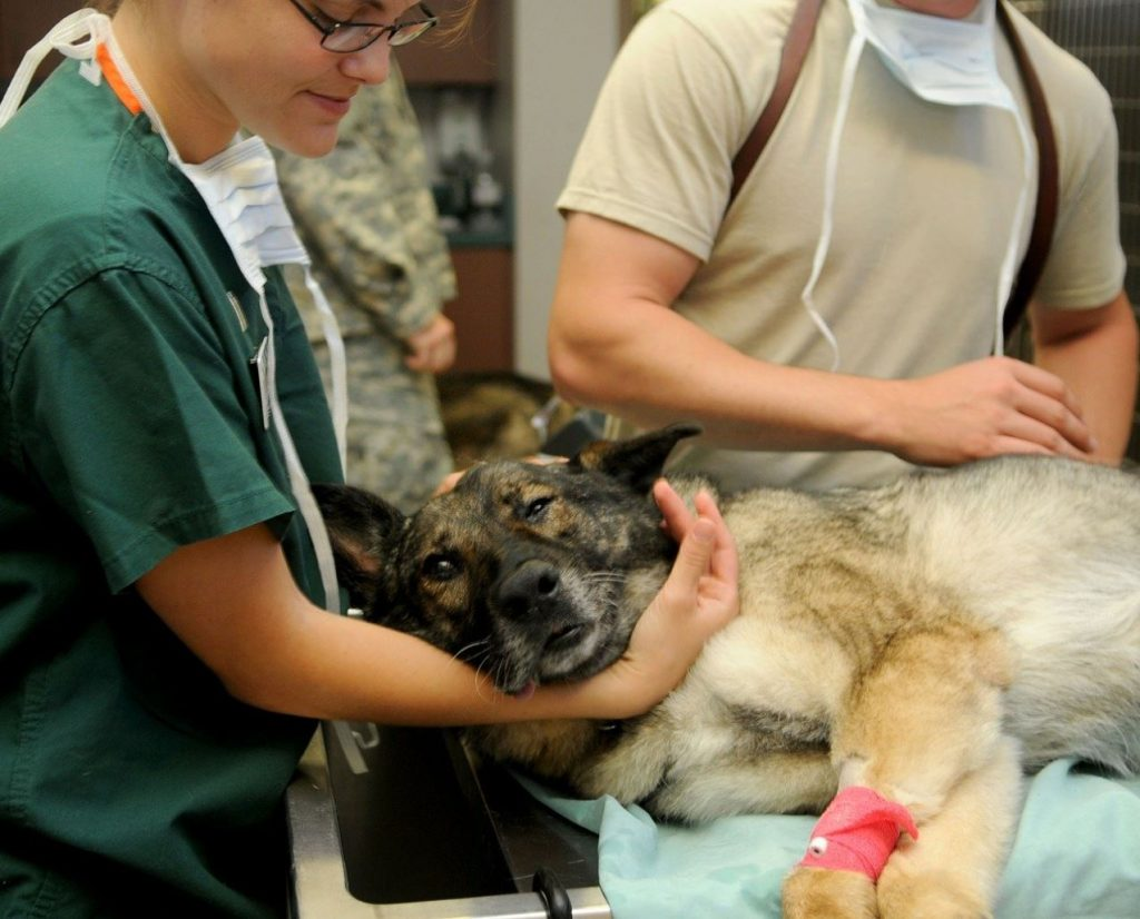 Picture of a dog with a bandaged leg